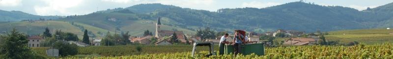 Bezinning op een Beaujolais wijngaard